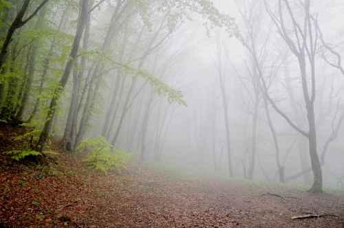 В тумане