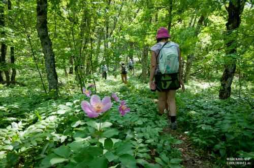В цветущем лесу