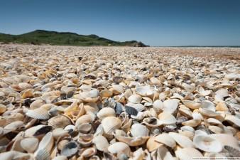 Ракушечные пляжи